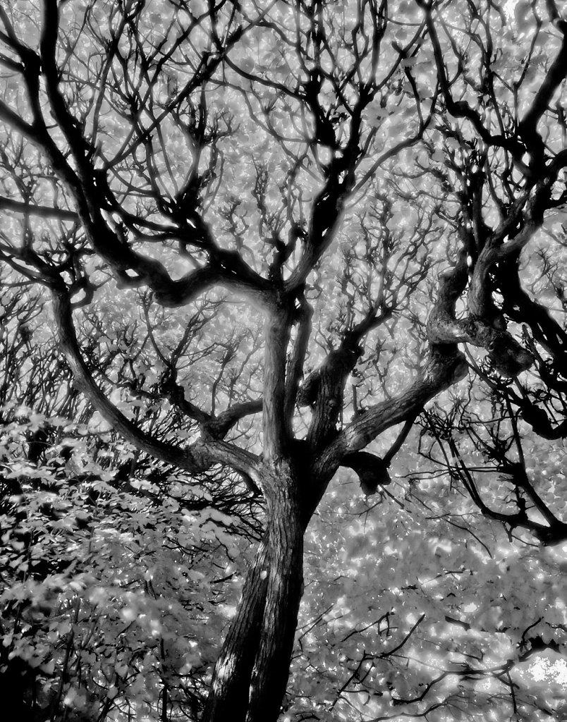 OlivaPark-tree-Edit-2.jpg